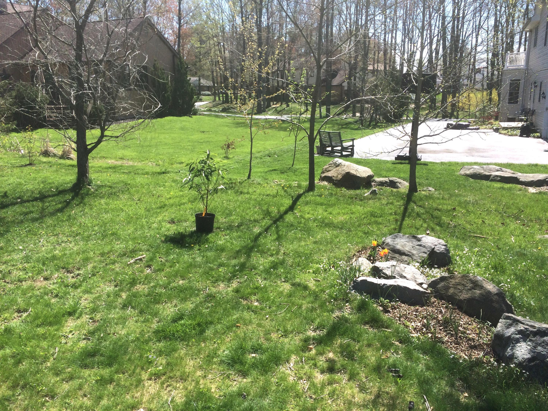 grow, magnolia, grow!